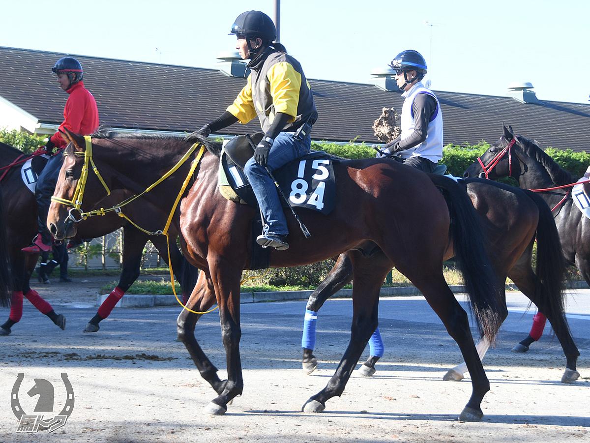 オウケンスターマンの馬体写真