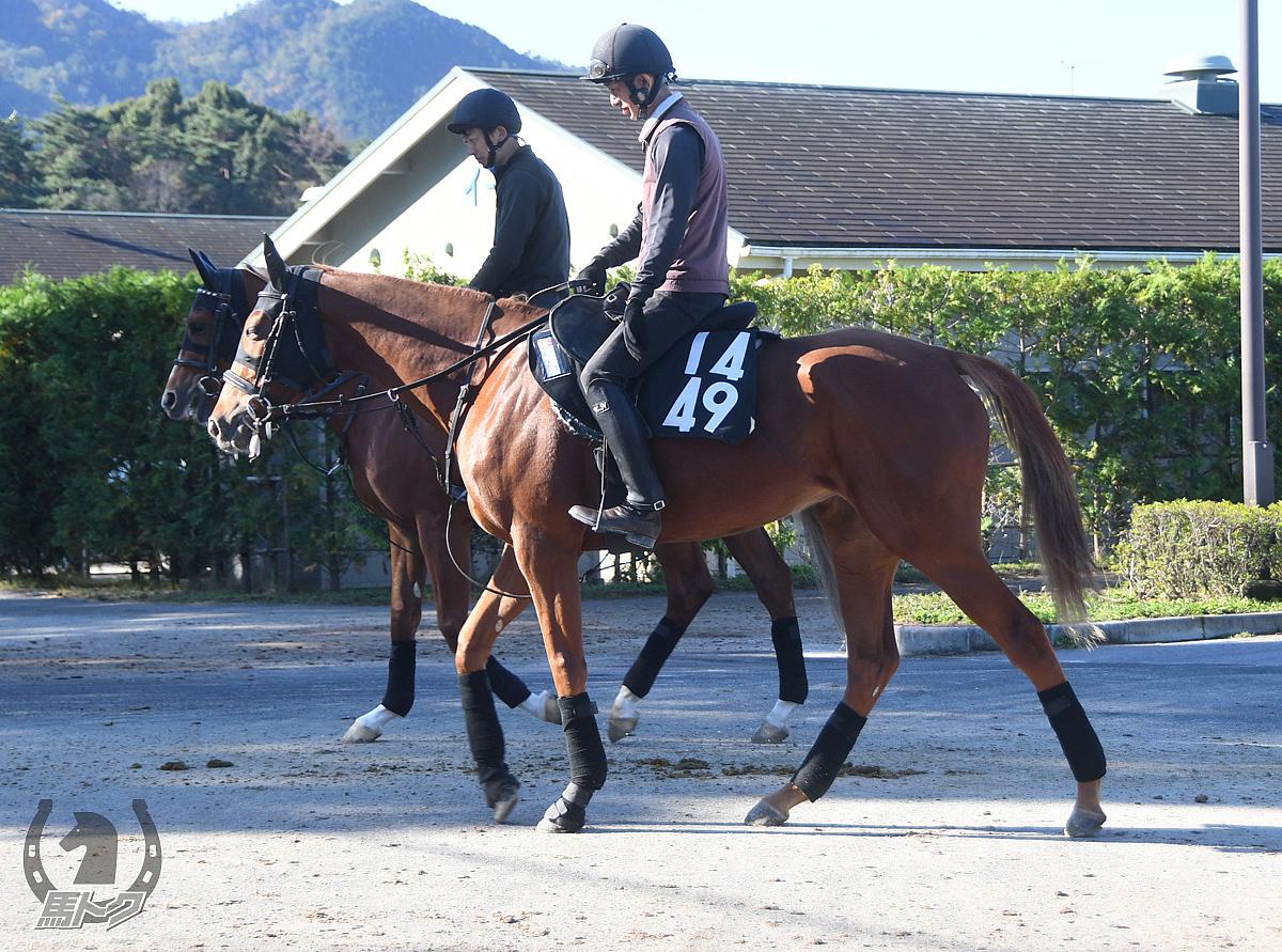クインズジャスミンの馬体写真