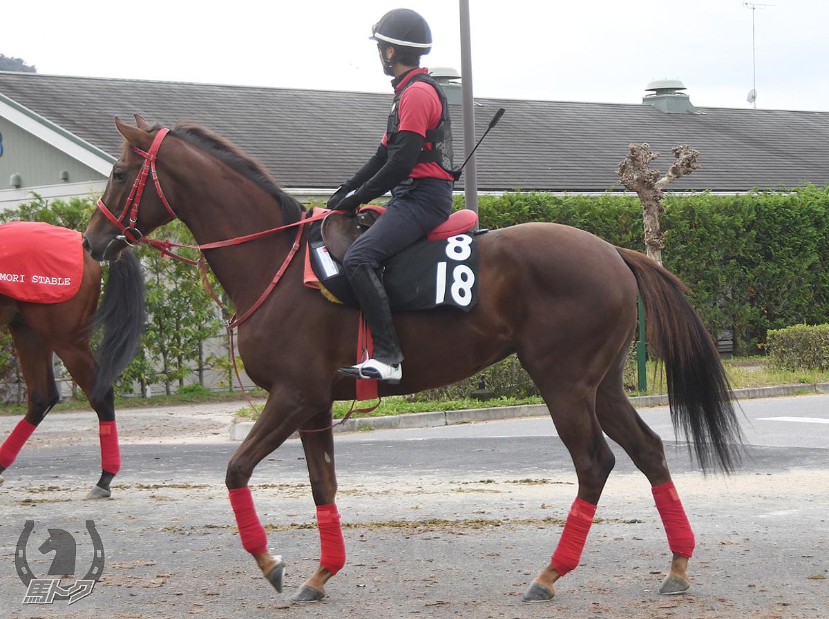 ヒデノレガシーの馬体写真