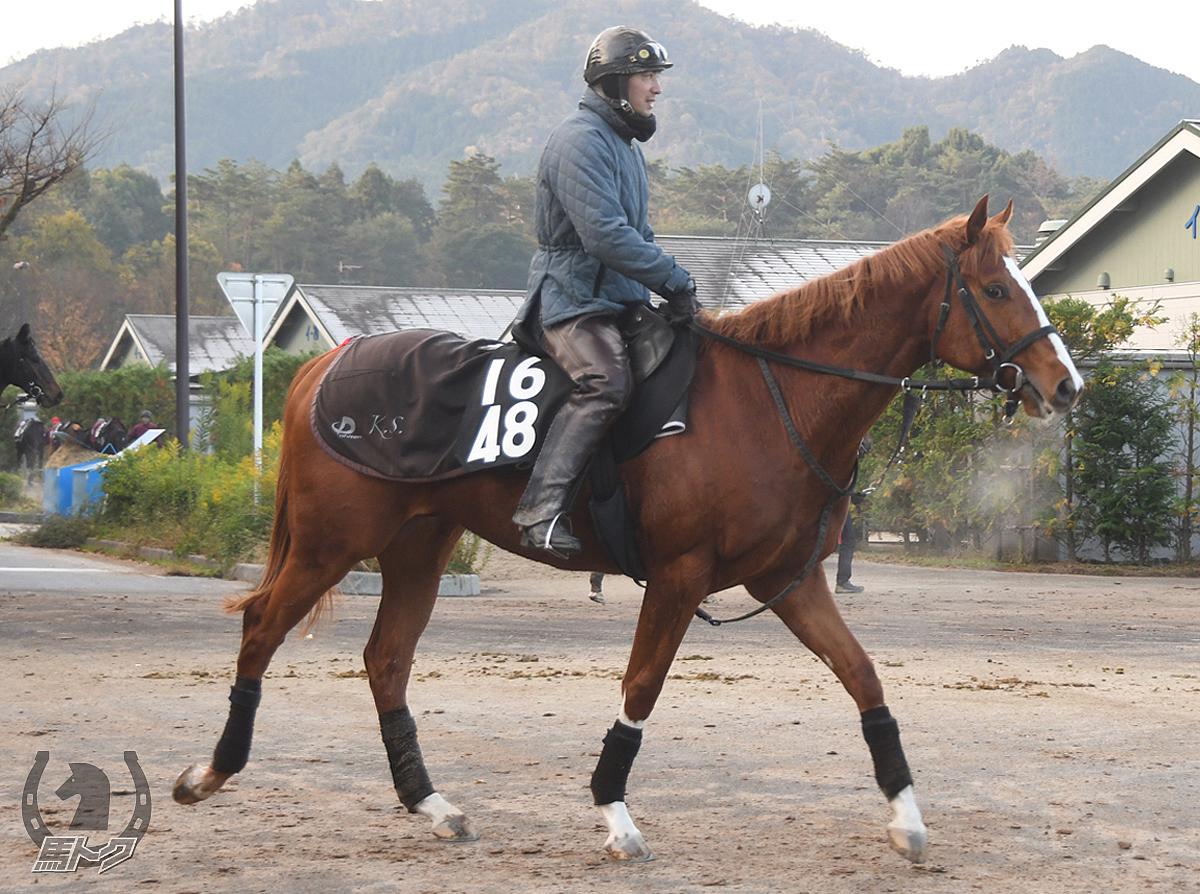 インヴィンチービレの馬体写真