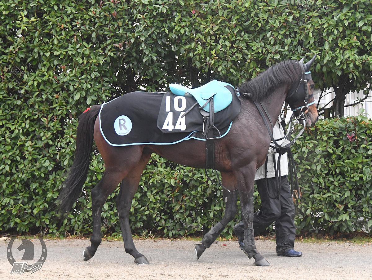メイショウワカタケの馬体写真