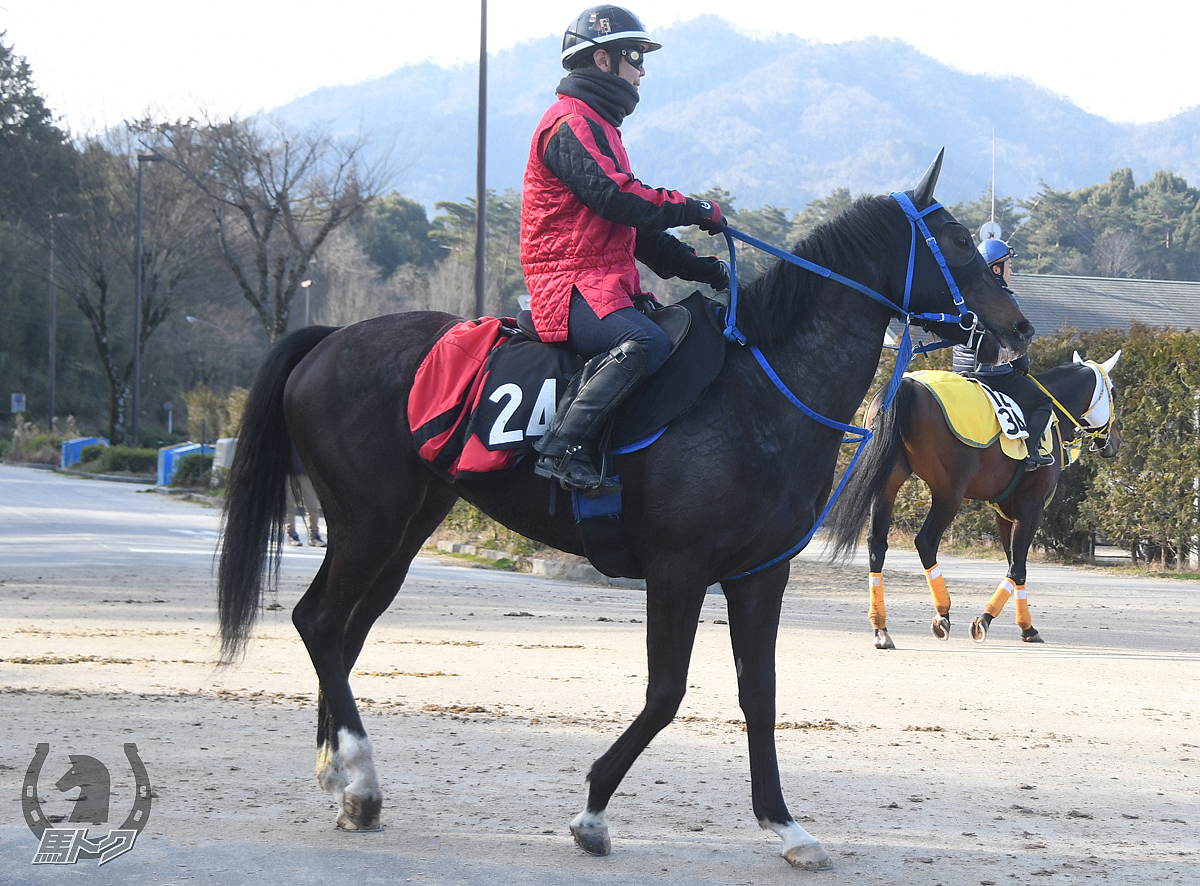 アクティブガールの馬体写真