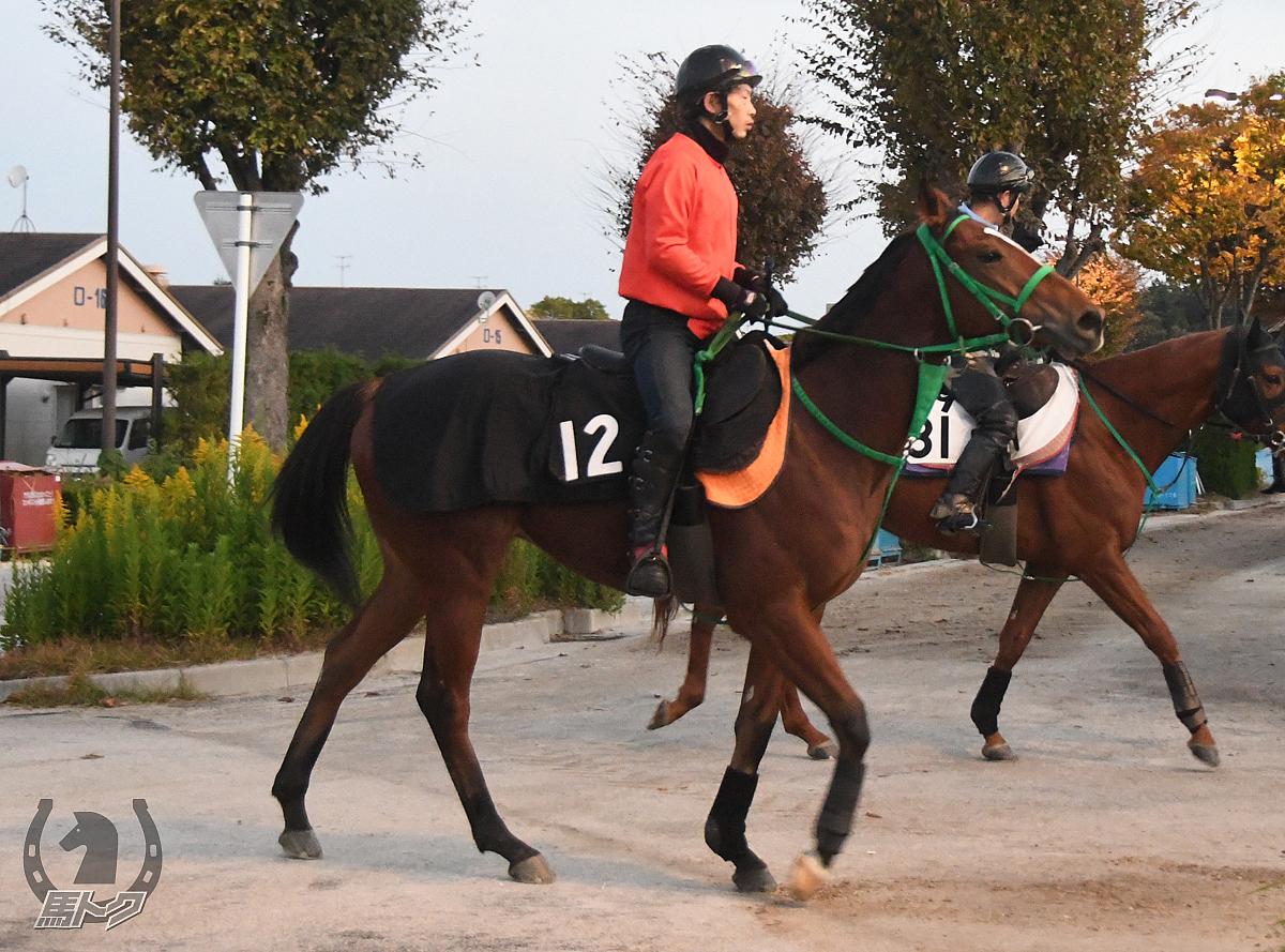 アイファーメンバーの馬体写真