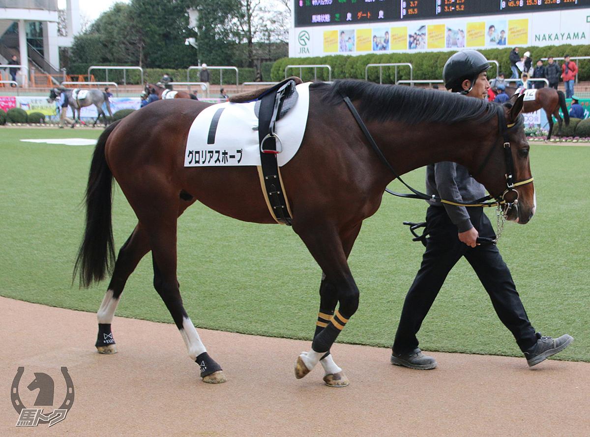 グロリアスホープの馬体写真