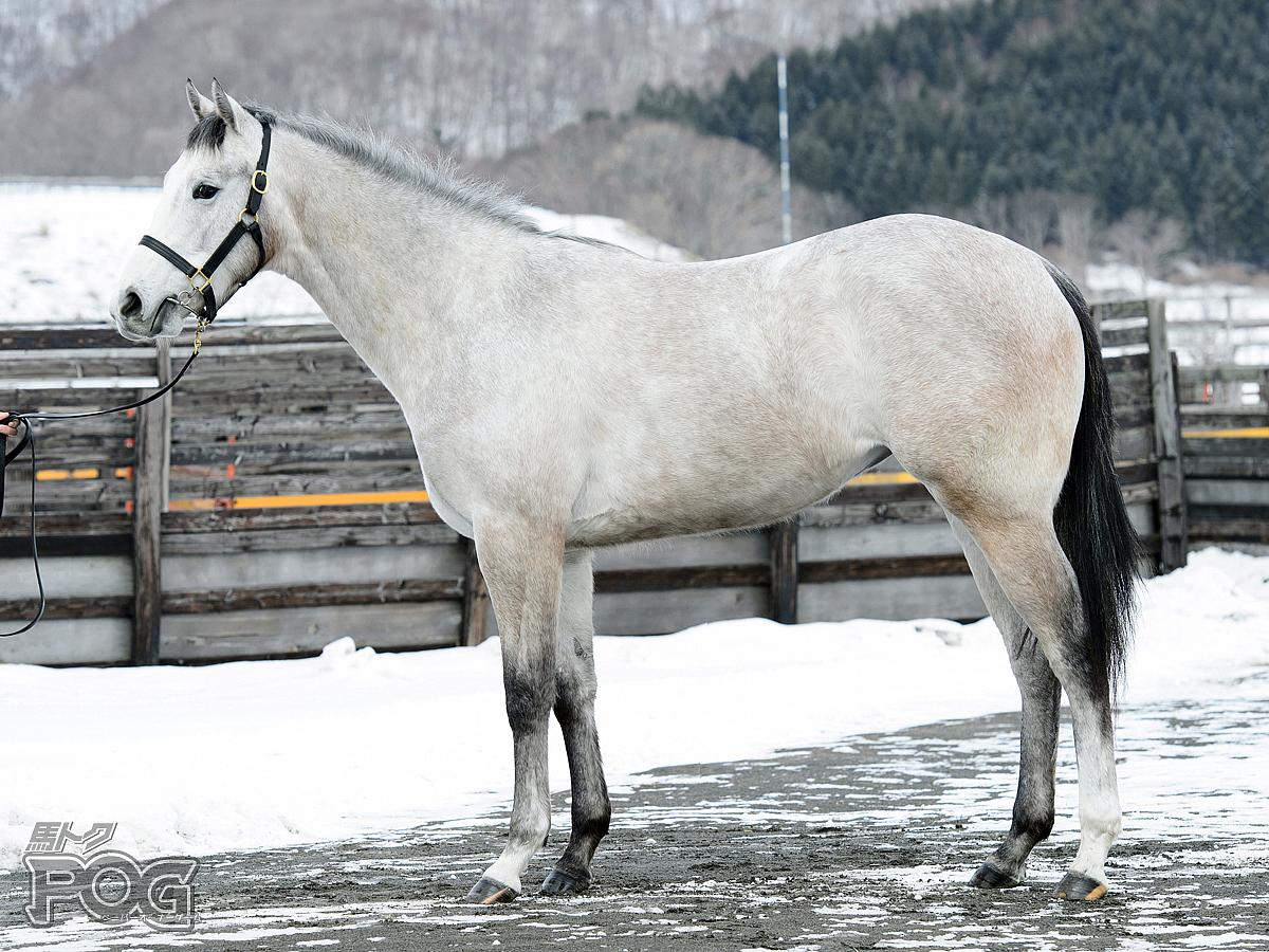 スノーベリーの馬体写真