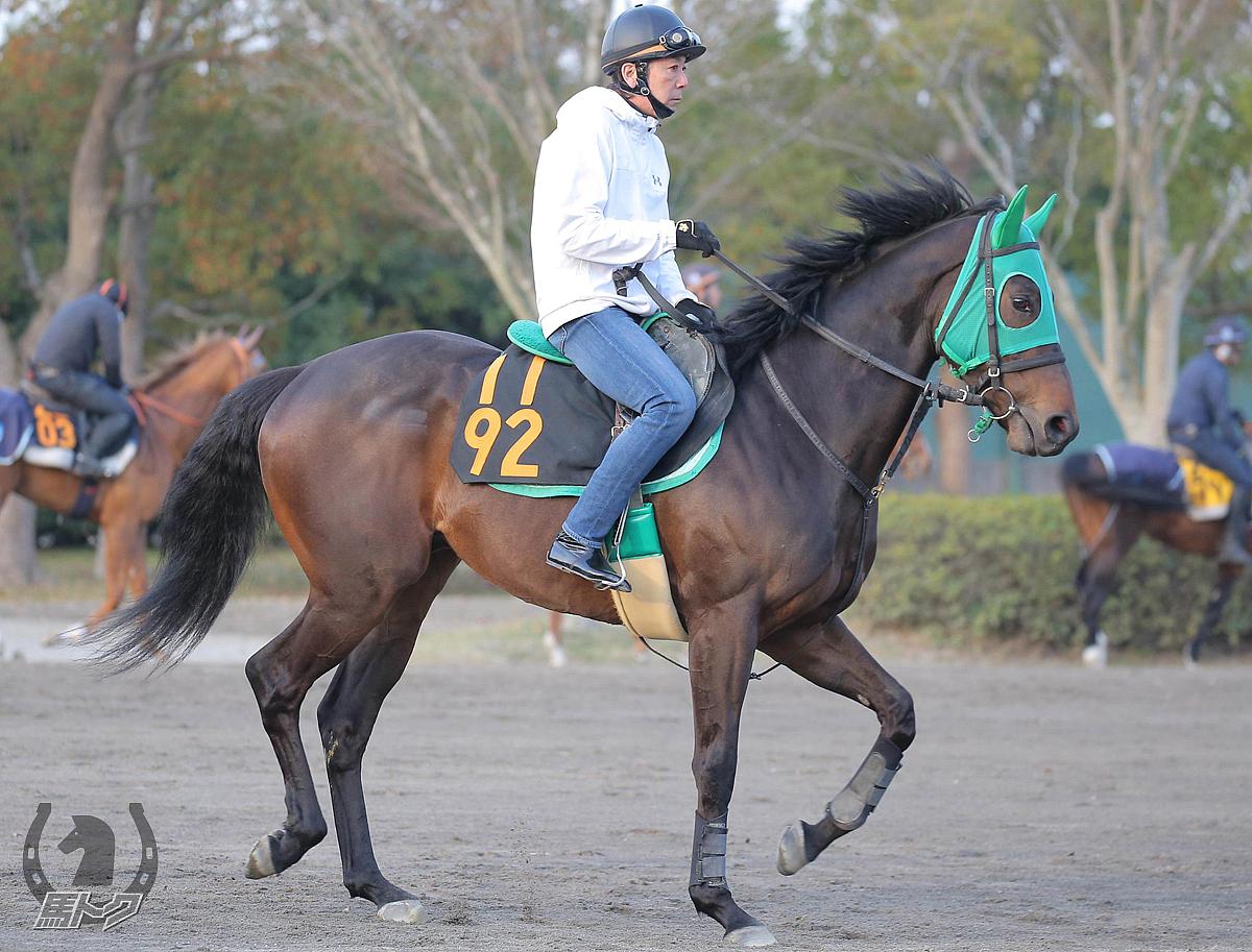 ホープフルサインの馬体写真
