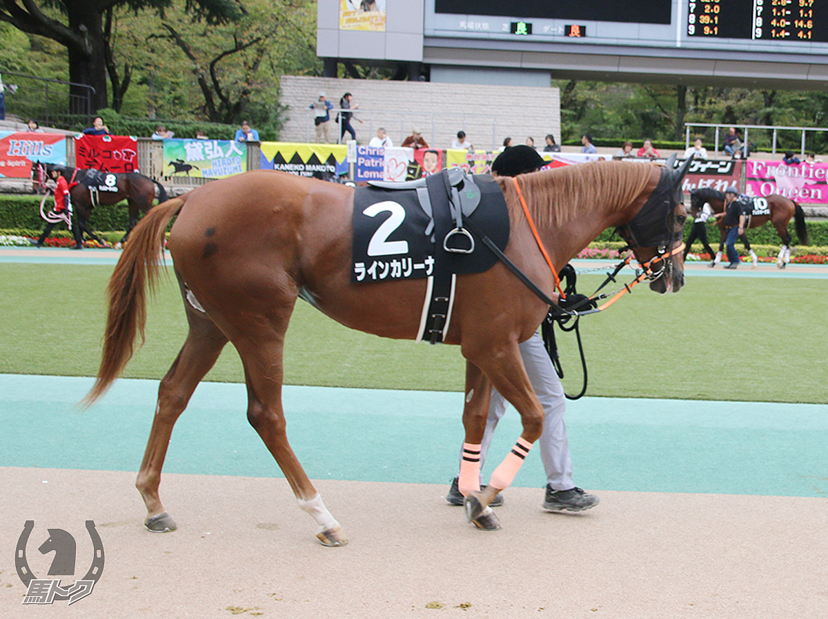 ラインカリーナの馬体写真