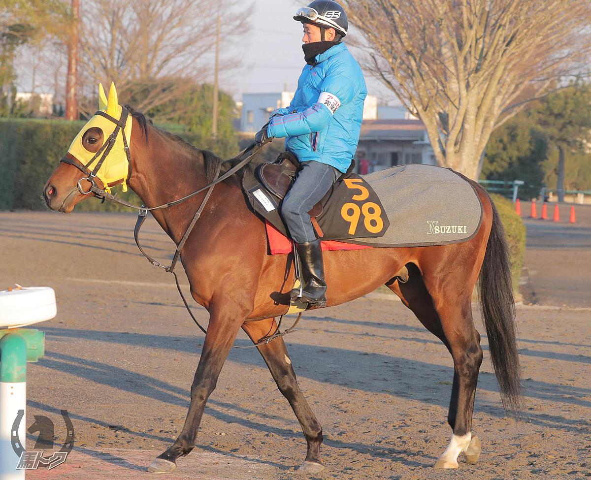 ショーヒデキラの馬体写真