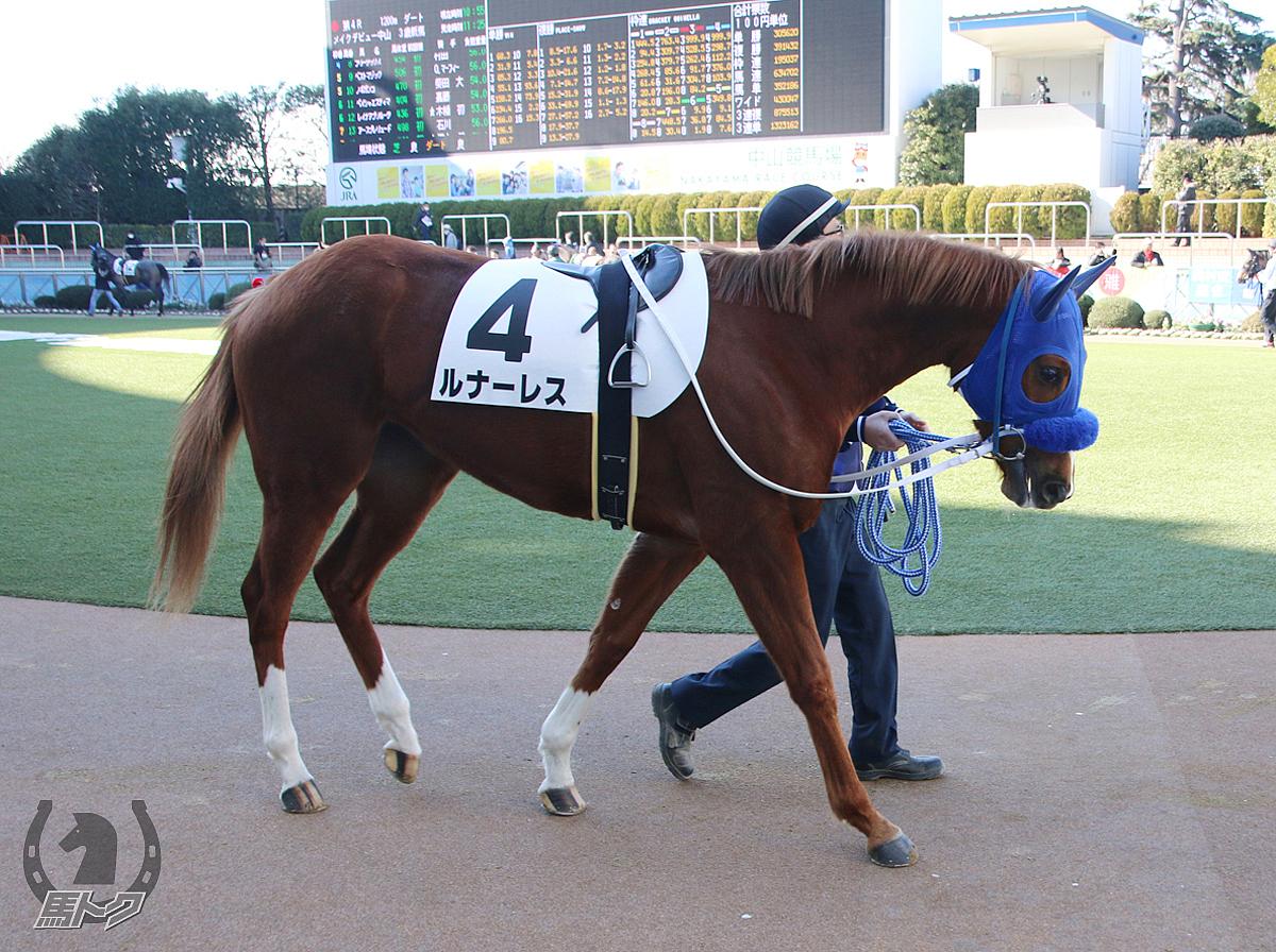 ルナーレスの馬体写真