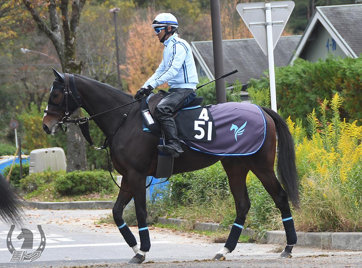ジュンヴァルボンヌの馬体写真