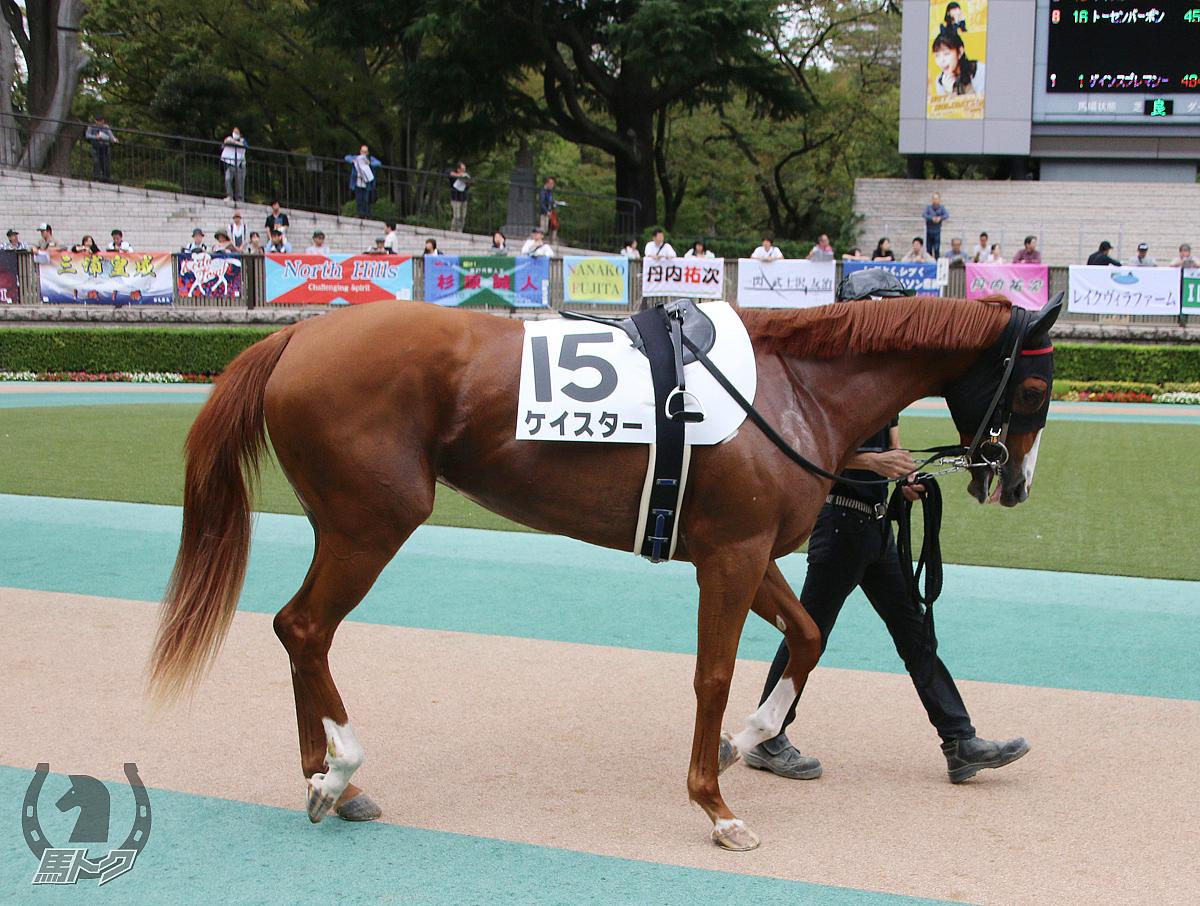 ケイスターの馬体写真