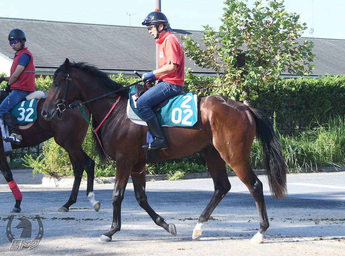 アマノコマンダーの馬体写真