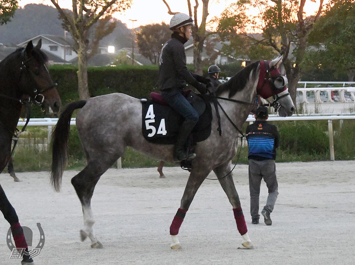 ジューンアイリスの馬体写真