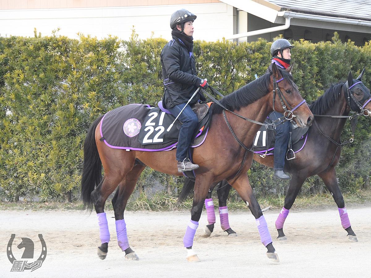 サンライズロッソの馬体写真