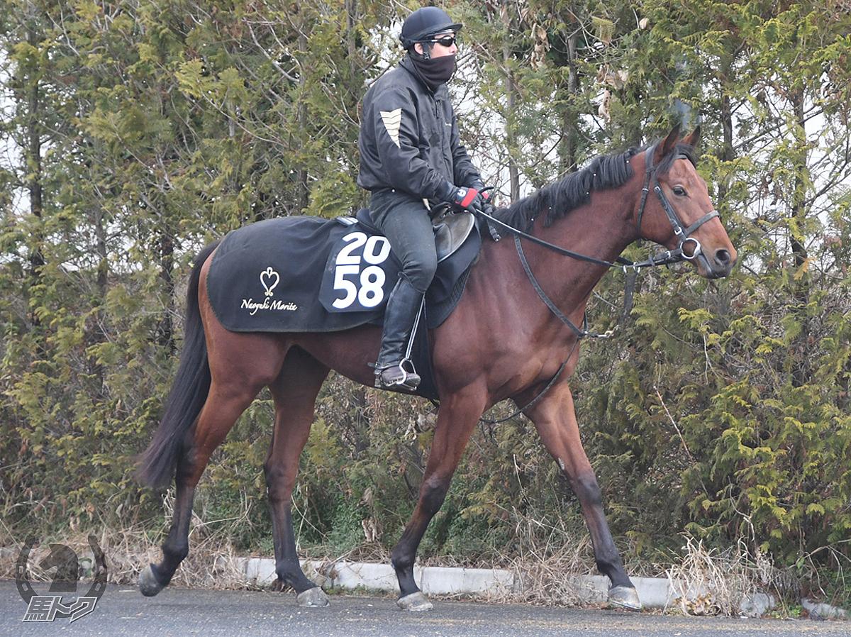 ボランテレオの馬体写真
