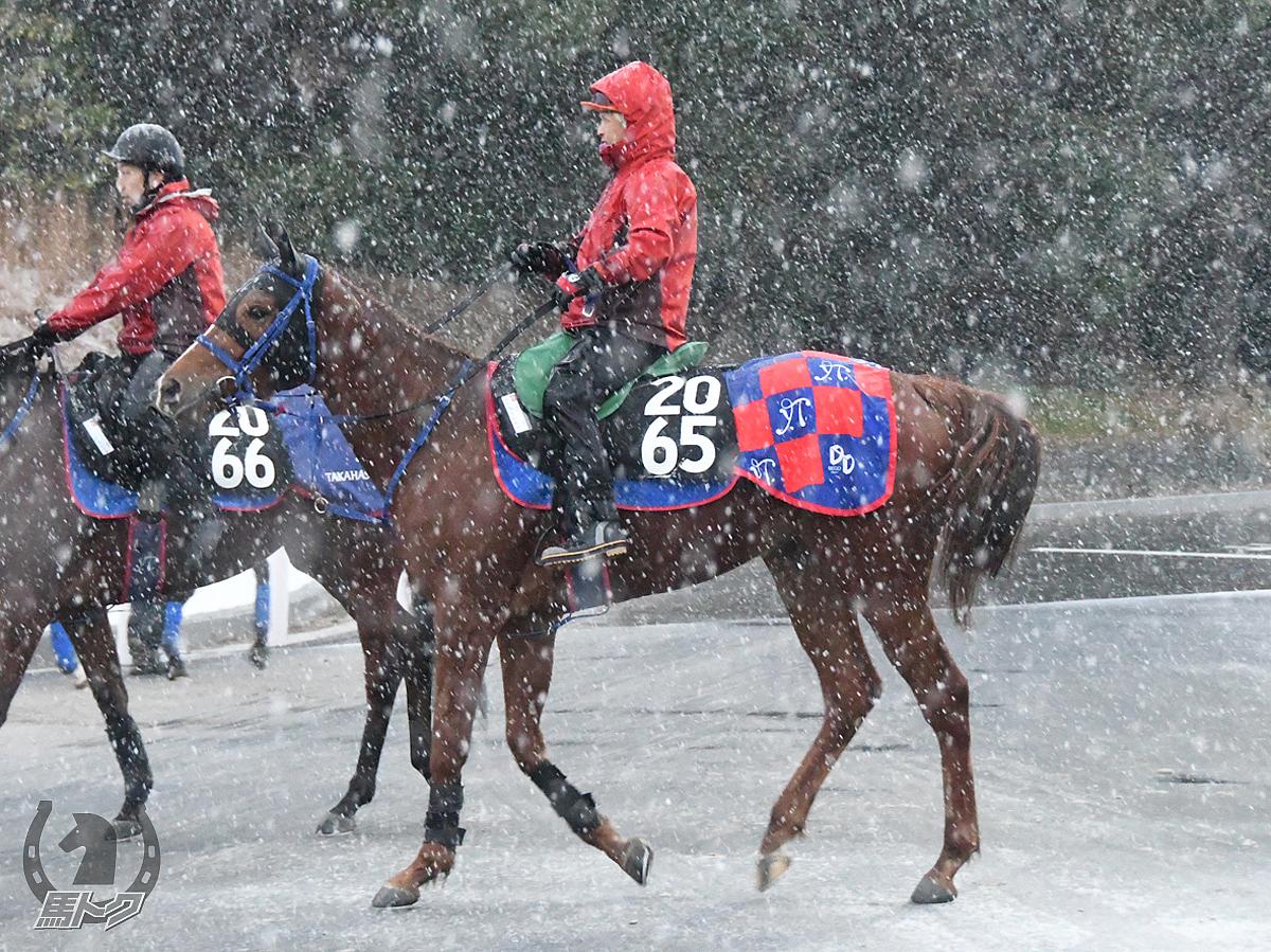 メイショウカスガの馬体写真