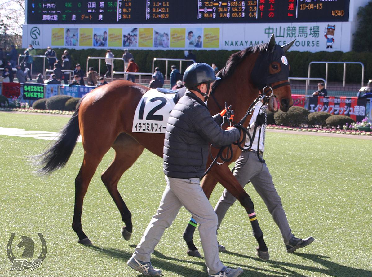 イチゴミルフィーユの馬体写真