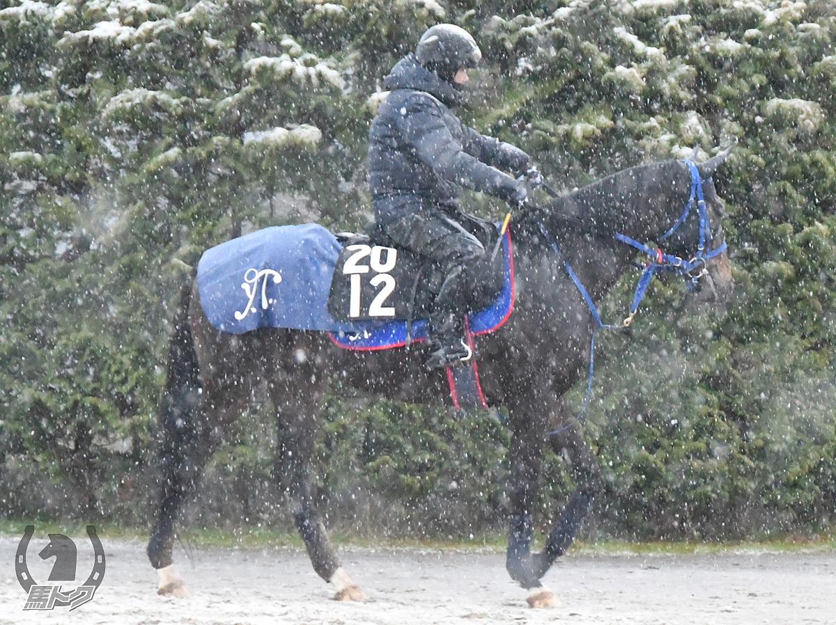タイセイフルーヴの馬体写真