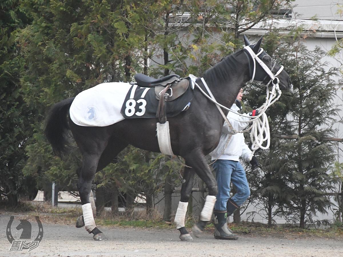 ブラックフェアリーの馬体写真