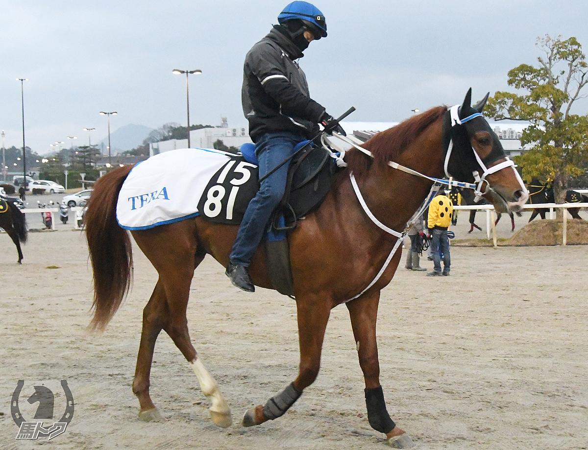 タイキマイスターの馬体写真