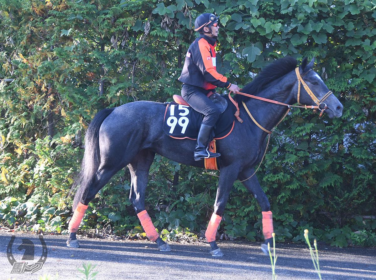イルフェソレイユの馬体写真