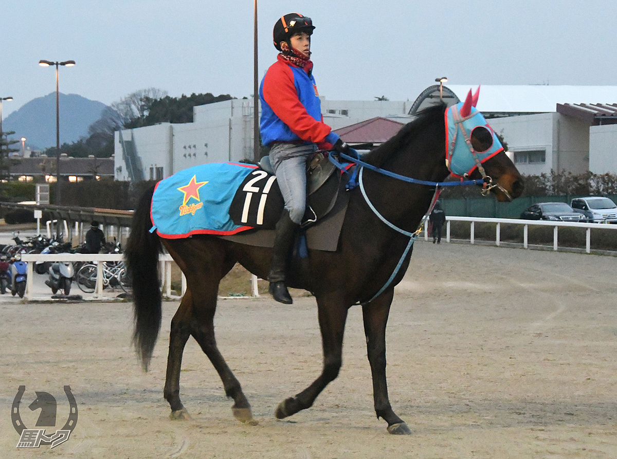 タイキデセーオの馬体写真