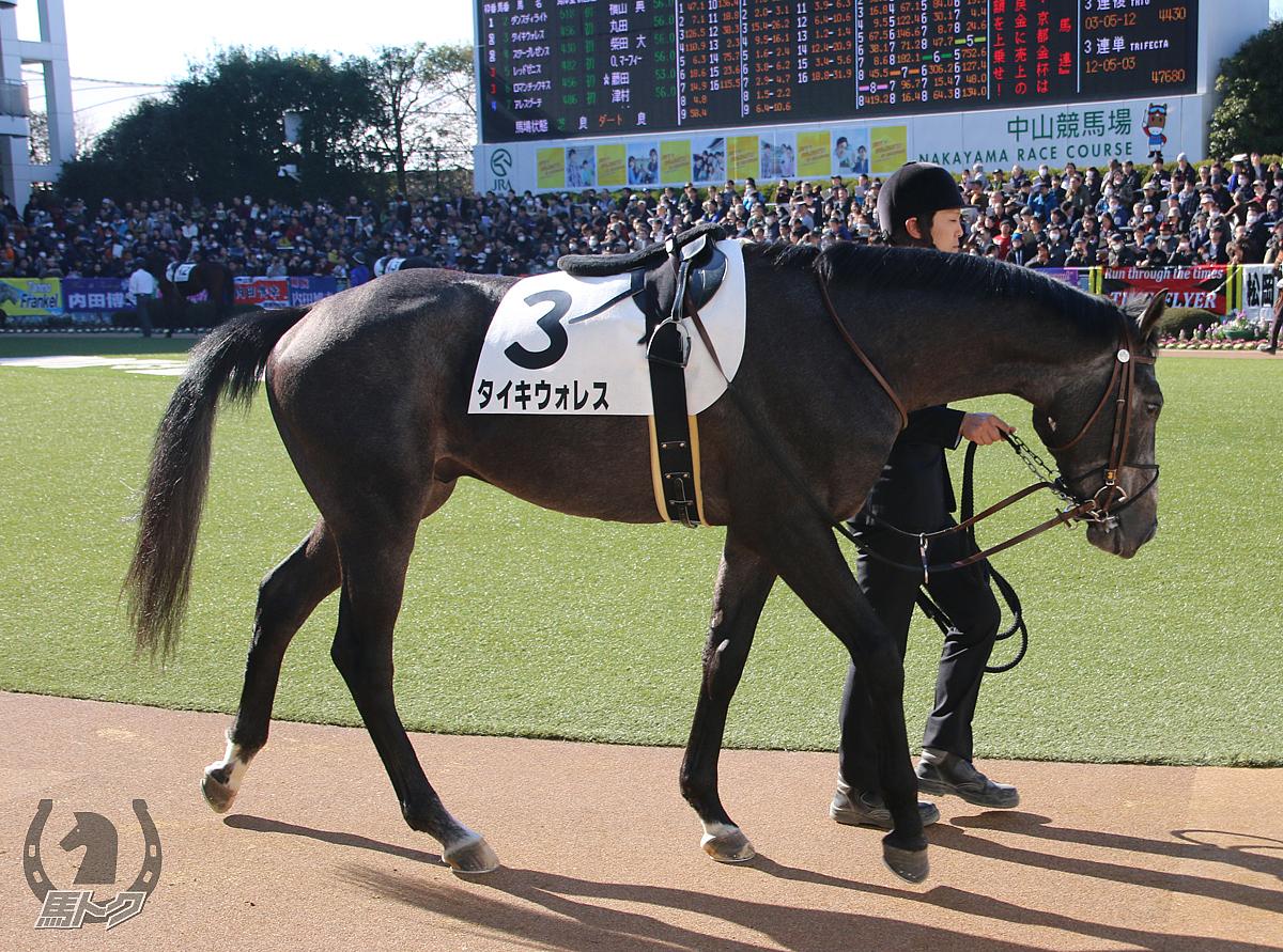 タイキウォレスの馬体写真