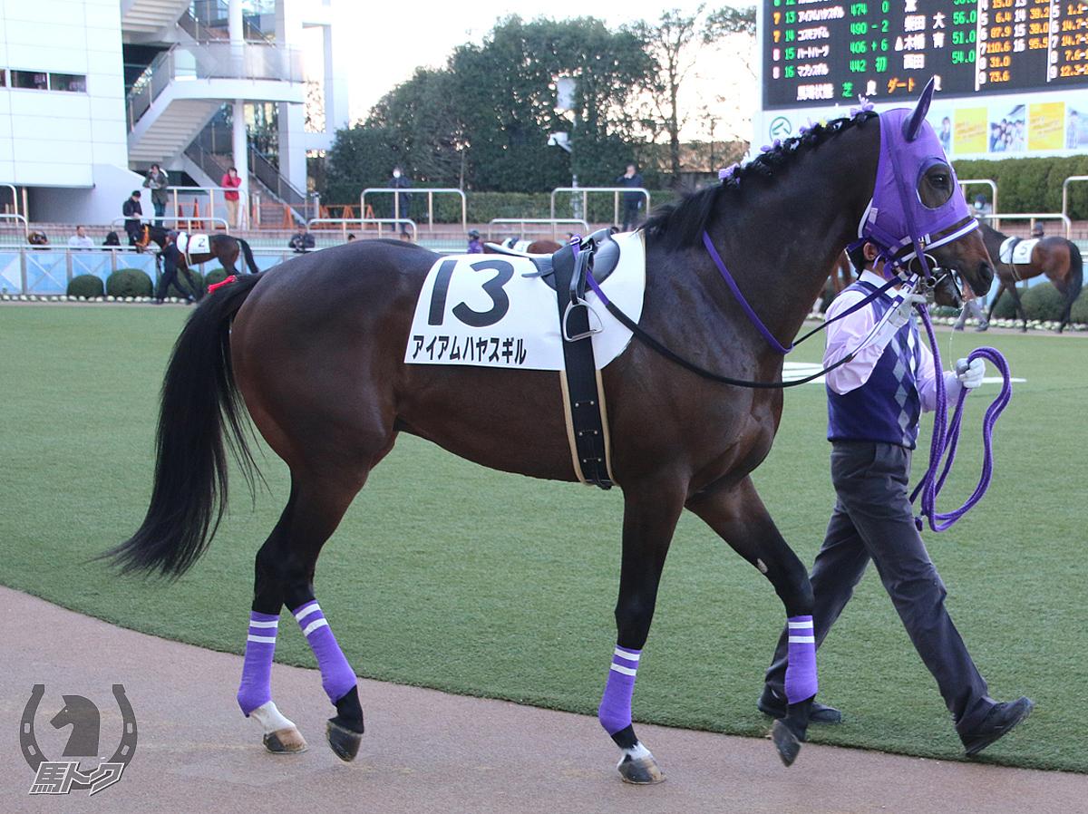 アイアムハヤスギルの馬体写真
