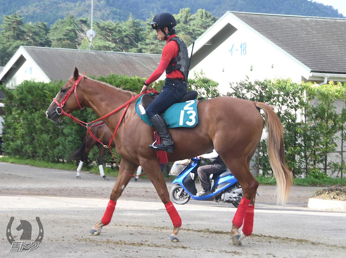 ユウチャージの馬体写真