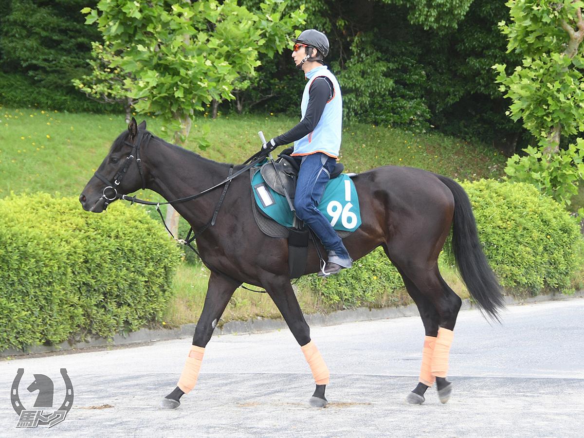 セデックカズマの馬体写真