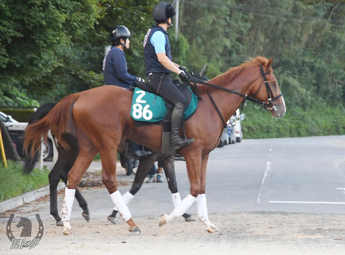 テーオーダンケルクの馬体写真