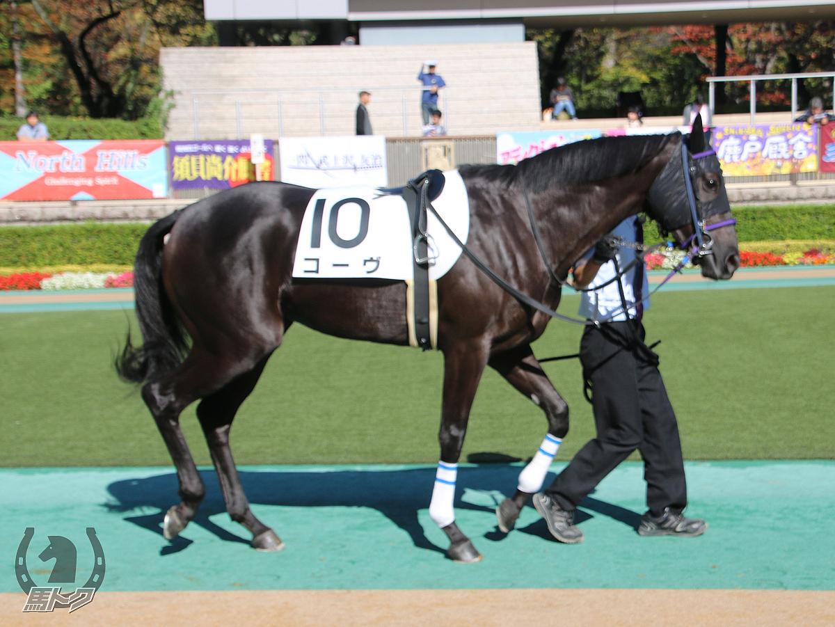 コーヴの馬体写真