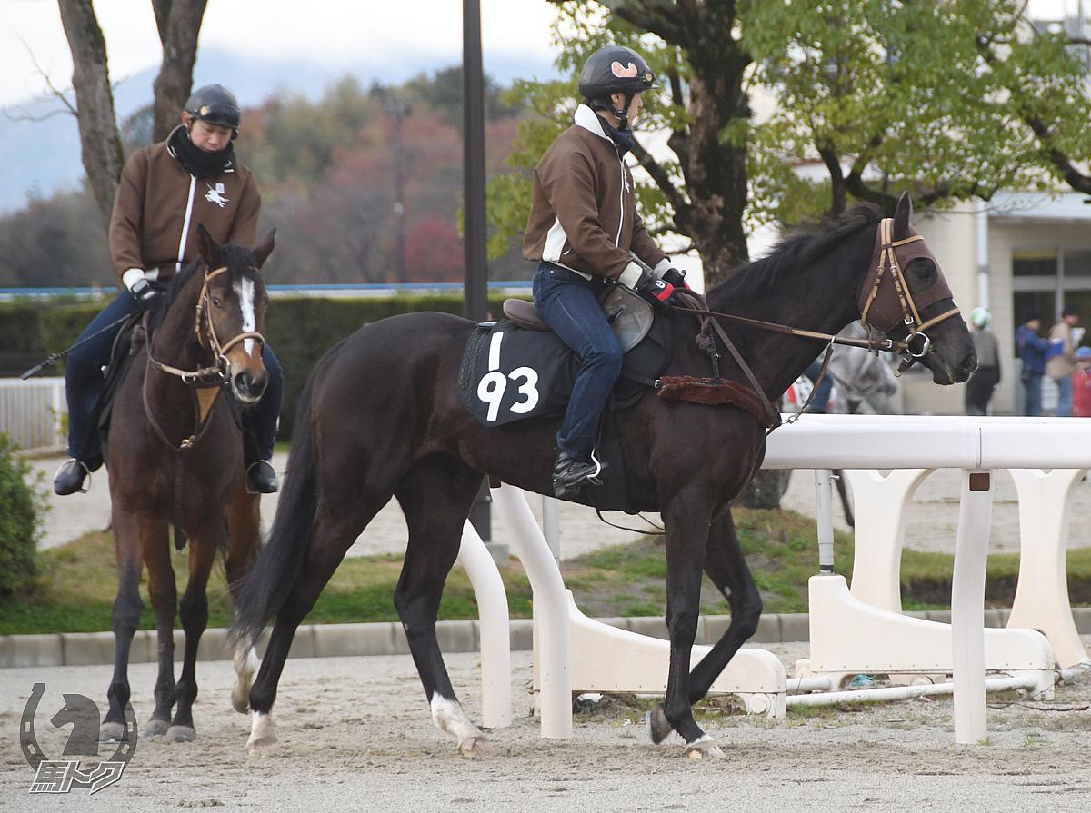 オノーレペスカの馬体写真