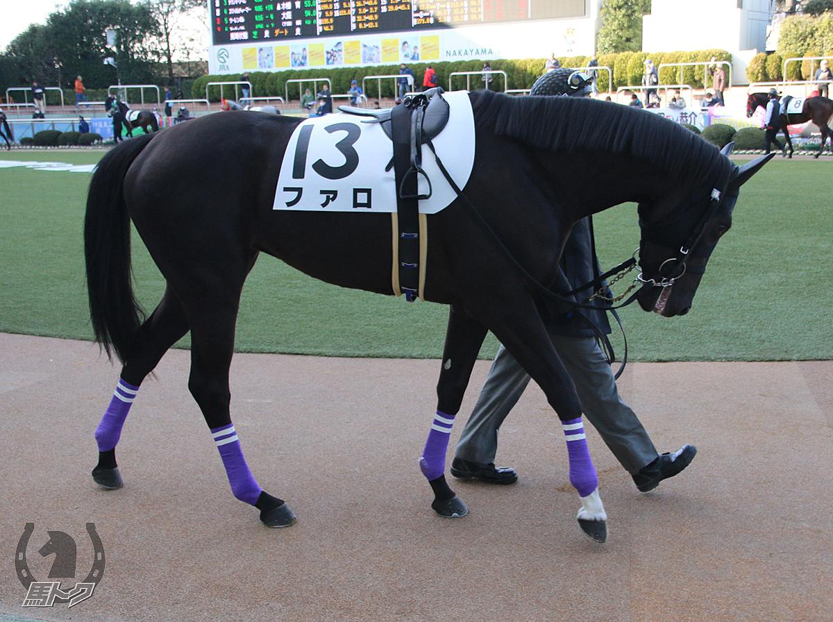 ファロの馬体写真