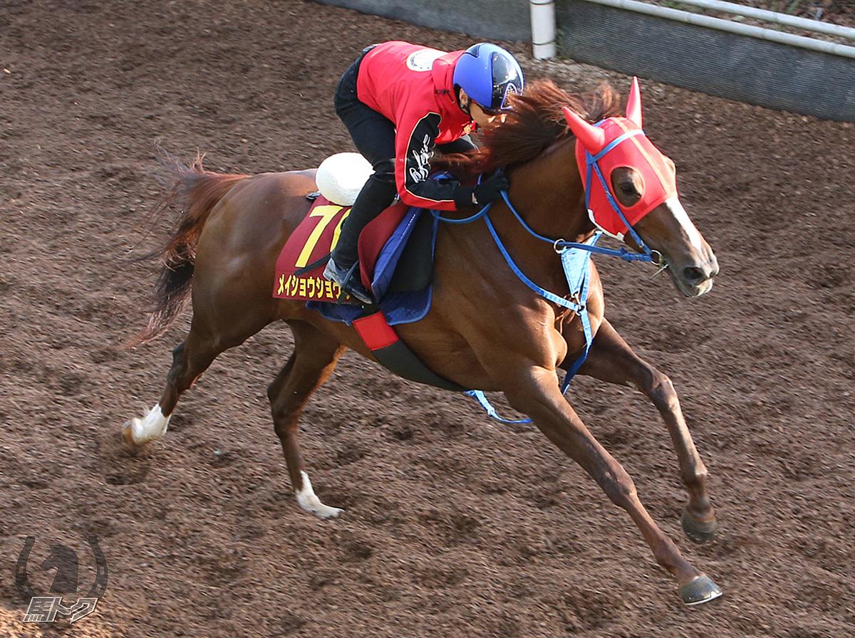メイショウショウブの馬体写真