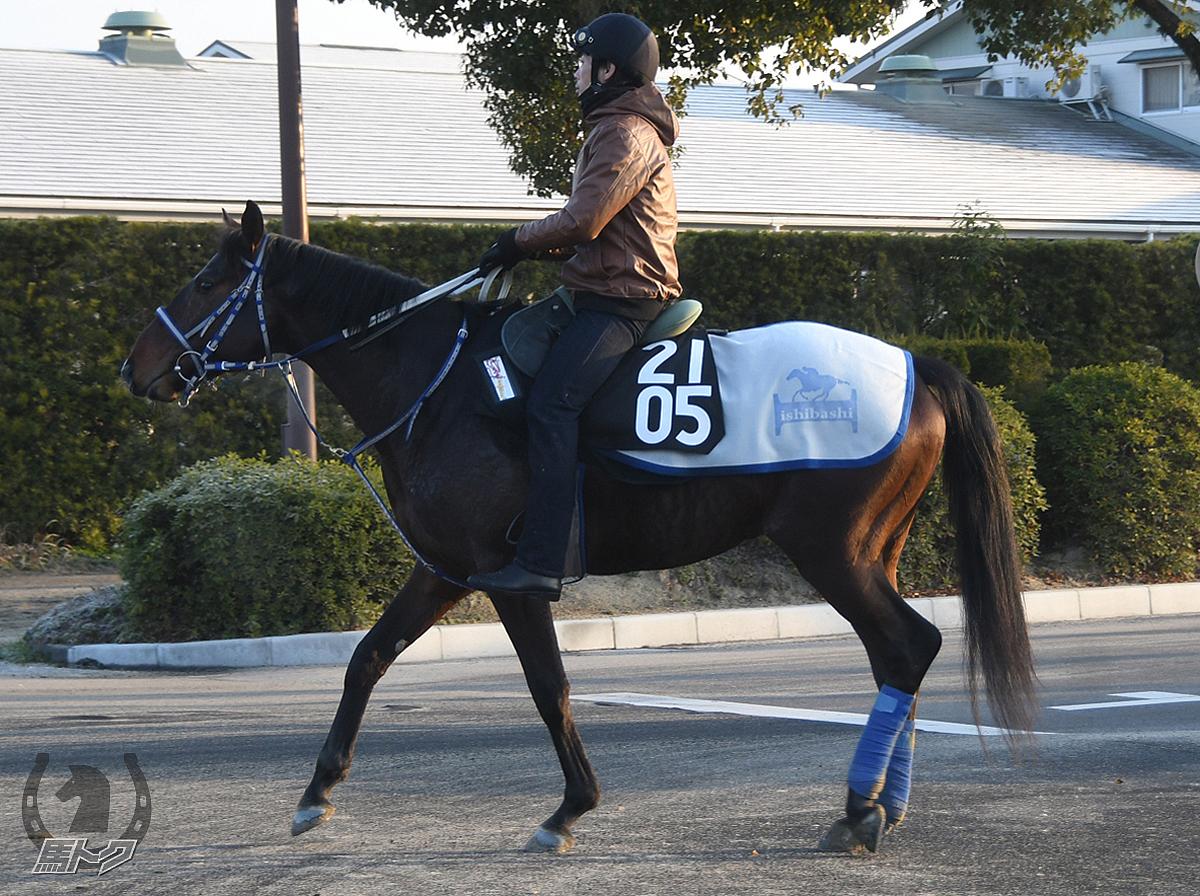 メイショウヤソキチの馬体写真