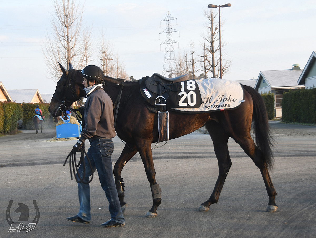 メイショウアステカの馬体写真