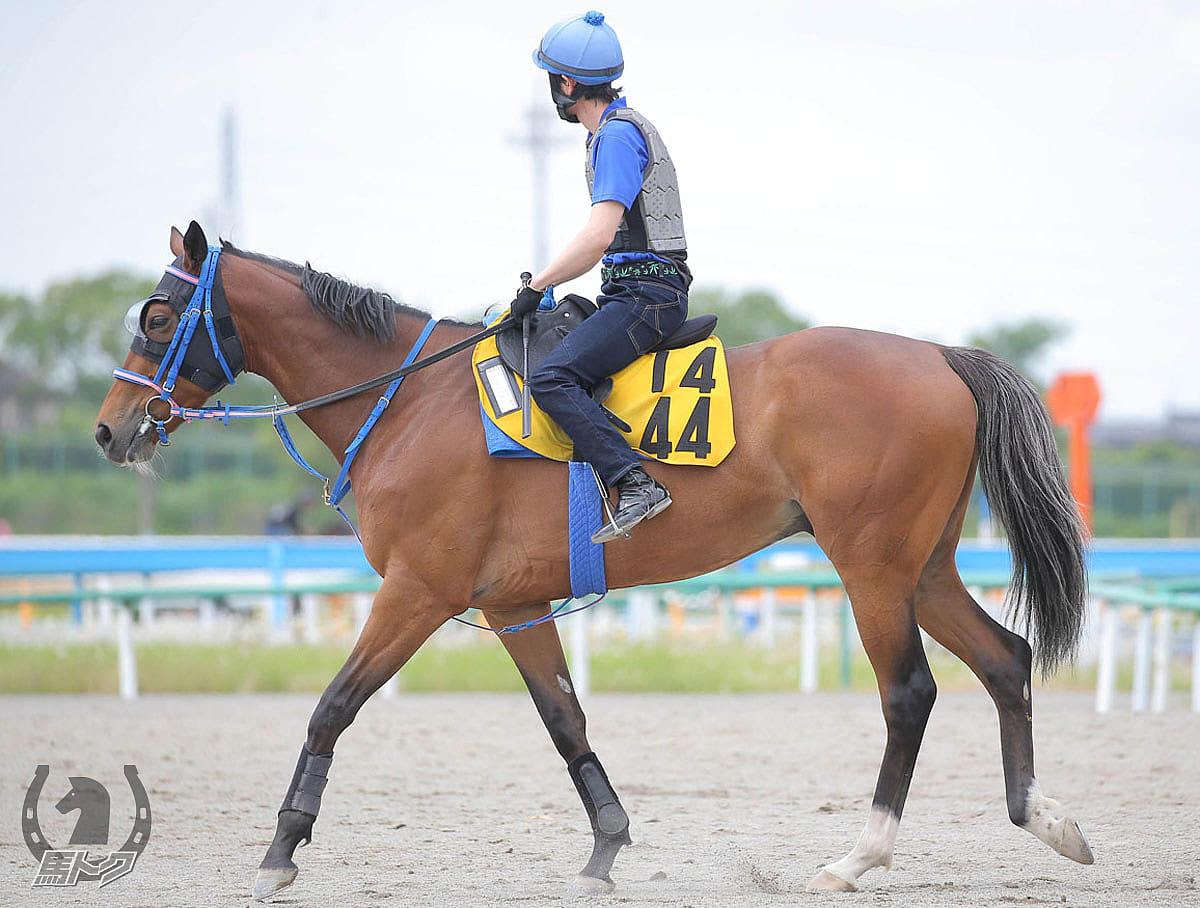 ヒュミドールの馬体写真
