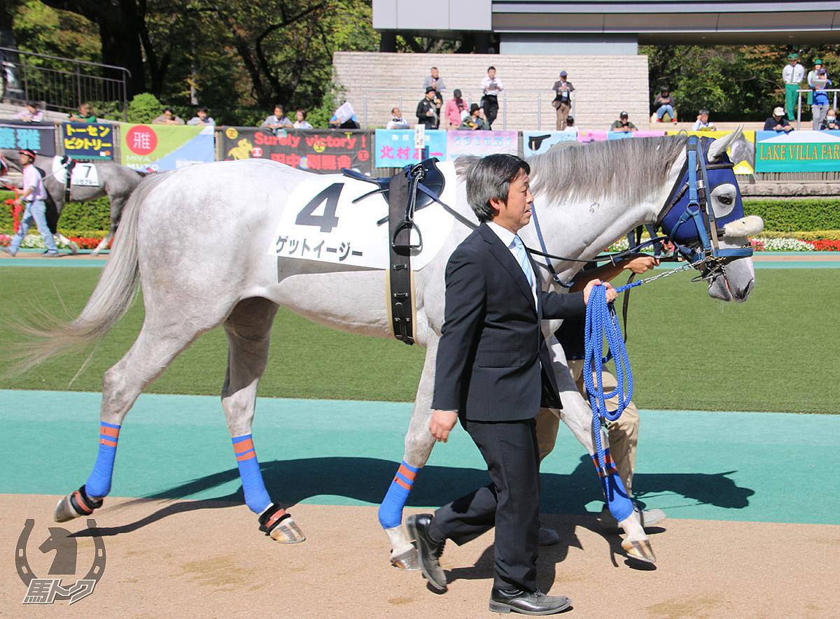ゲットイージーの馬体写真
