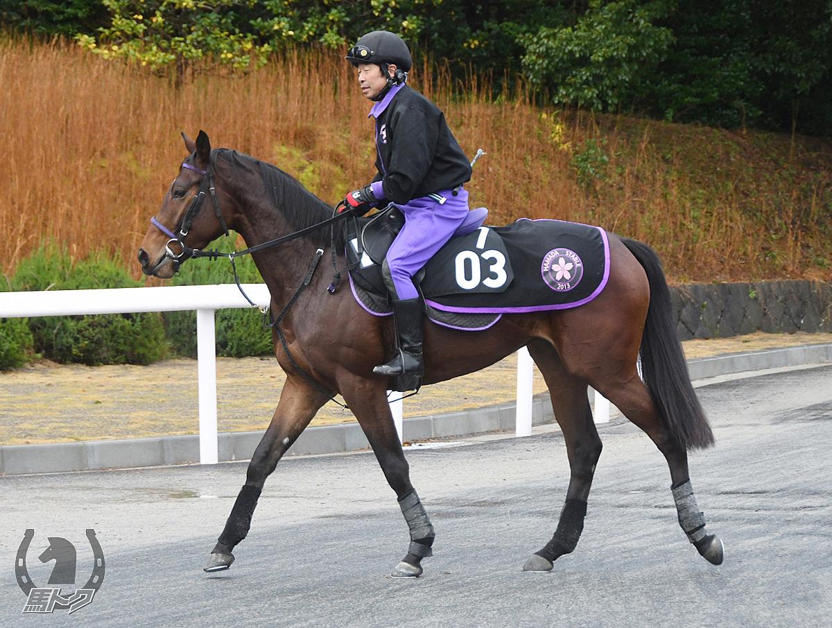トモノモアナの馬体写真