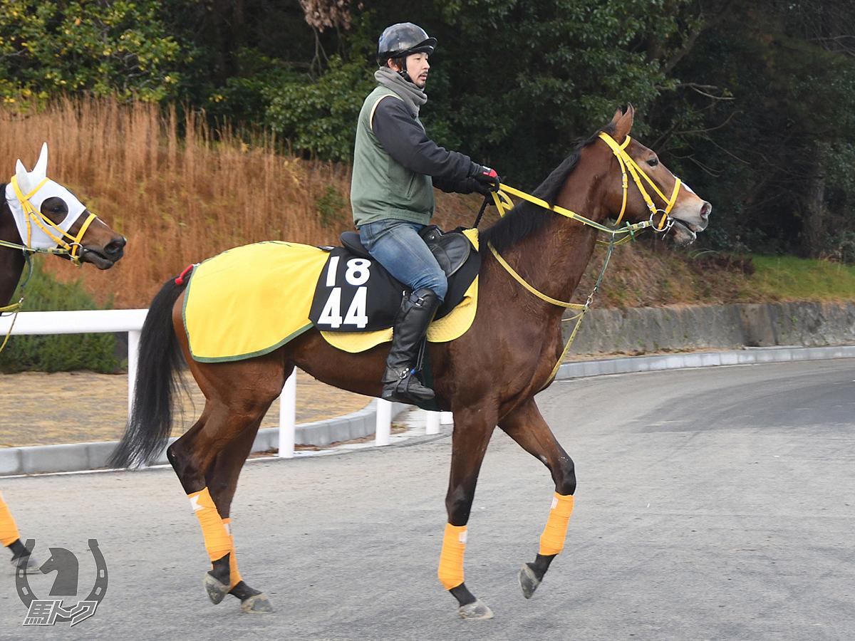 ルージュフォンセの馬体写真