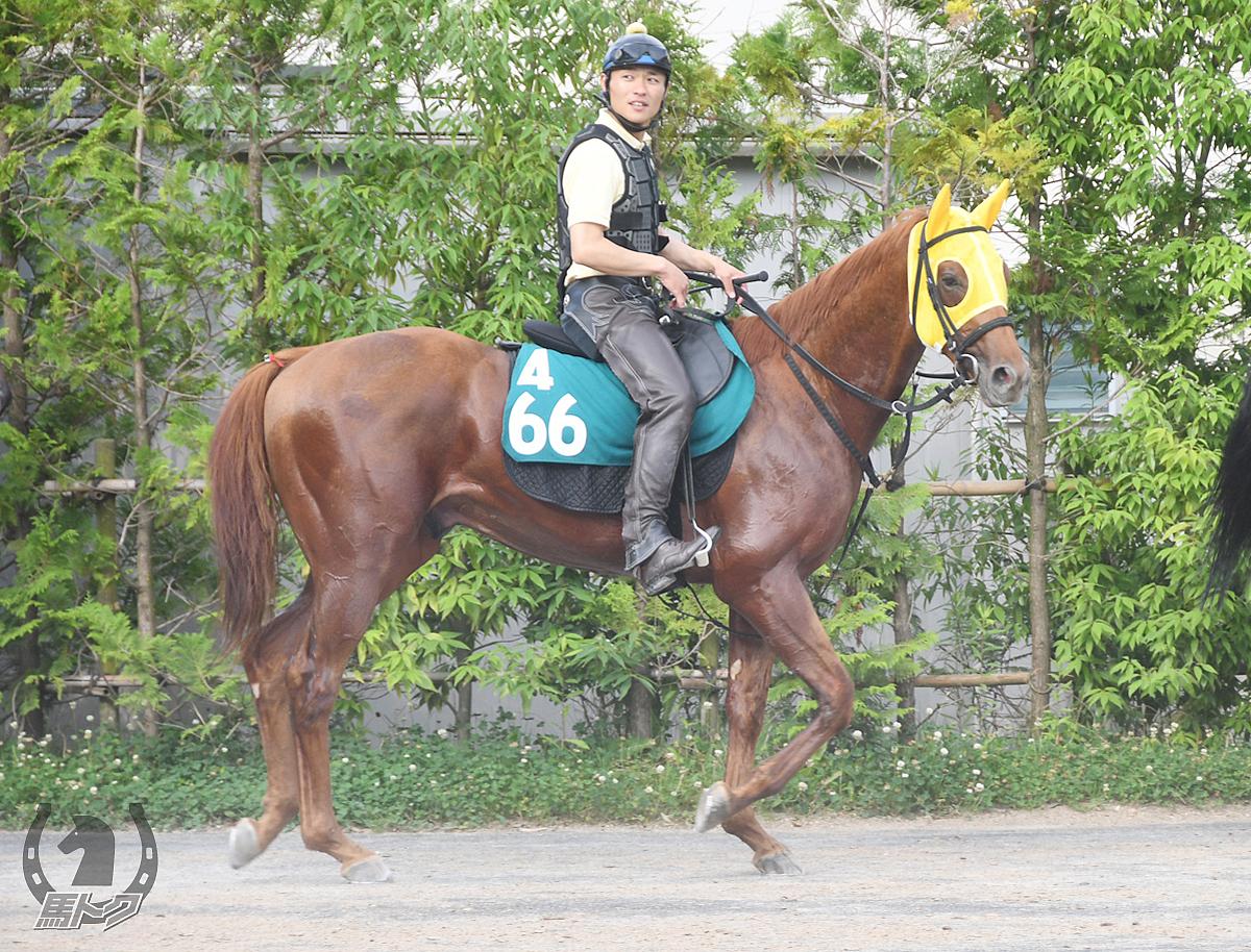 トップウイナーの馬体写真