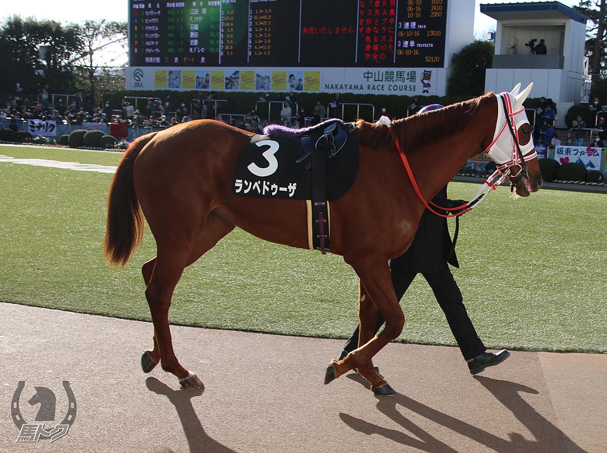 ランペドゥーザの馬体写真