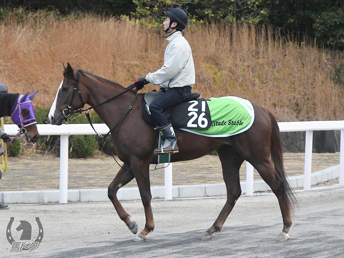 ププッピドゥの馬体写真