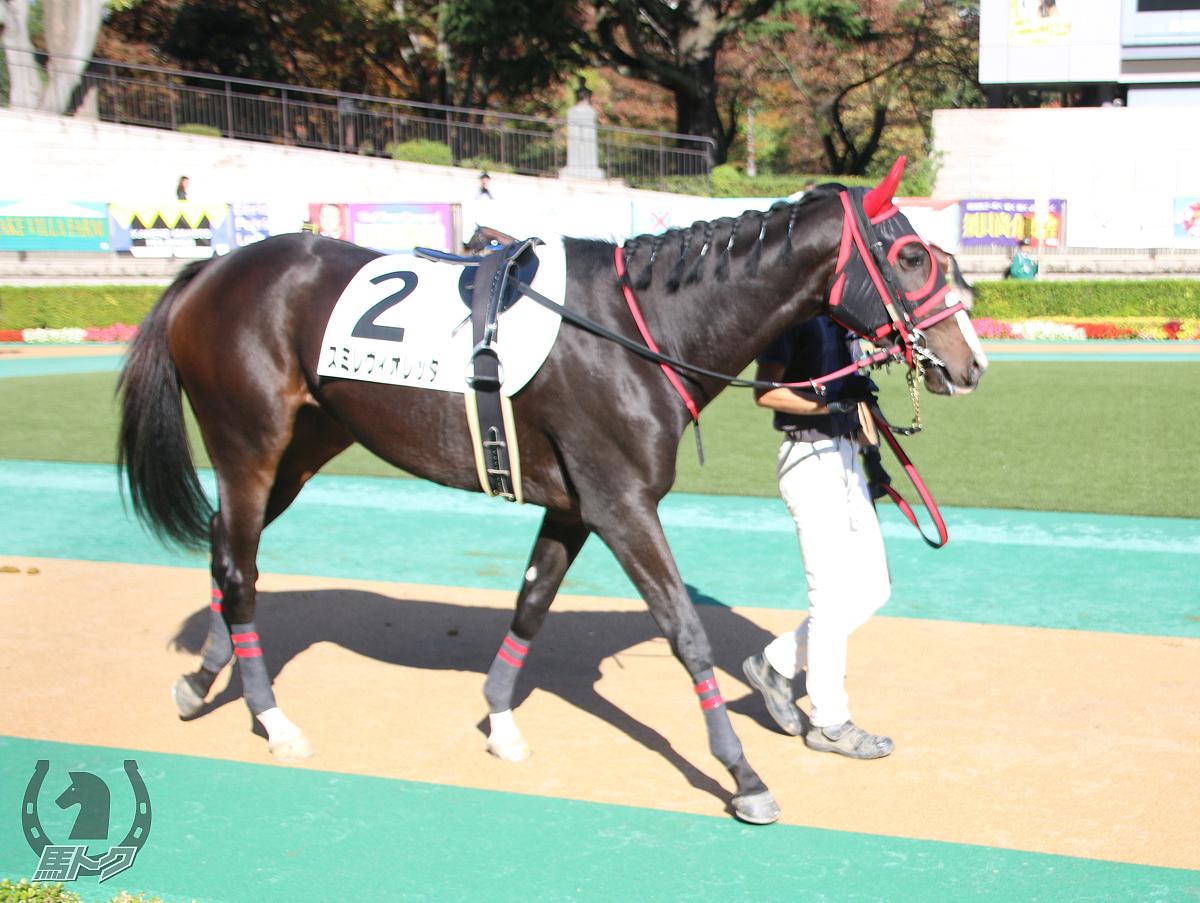 スミレヴィオレッタの馬体写真