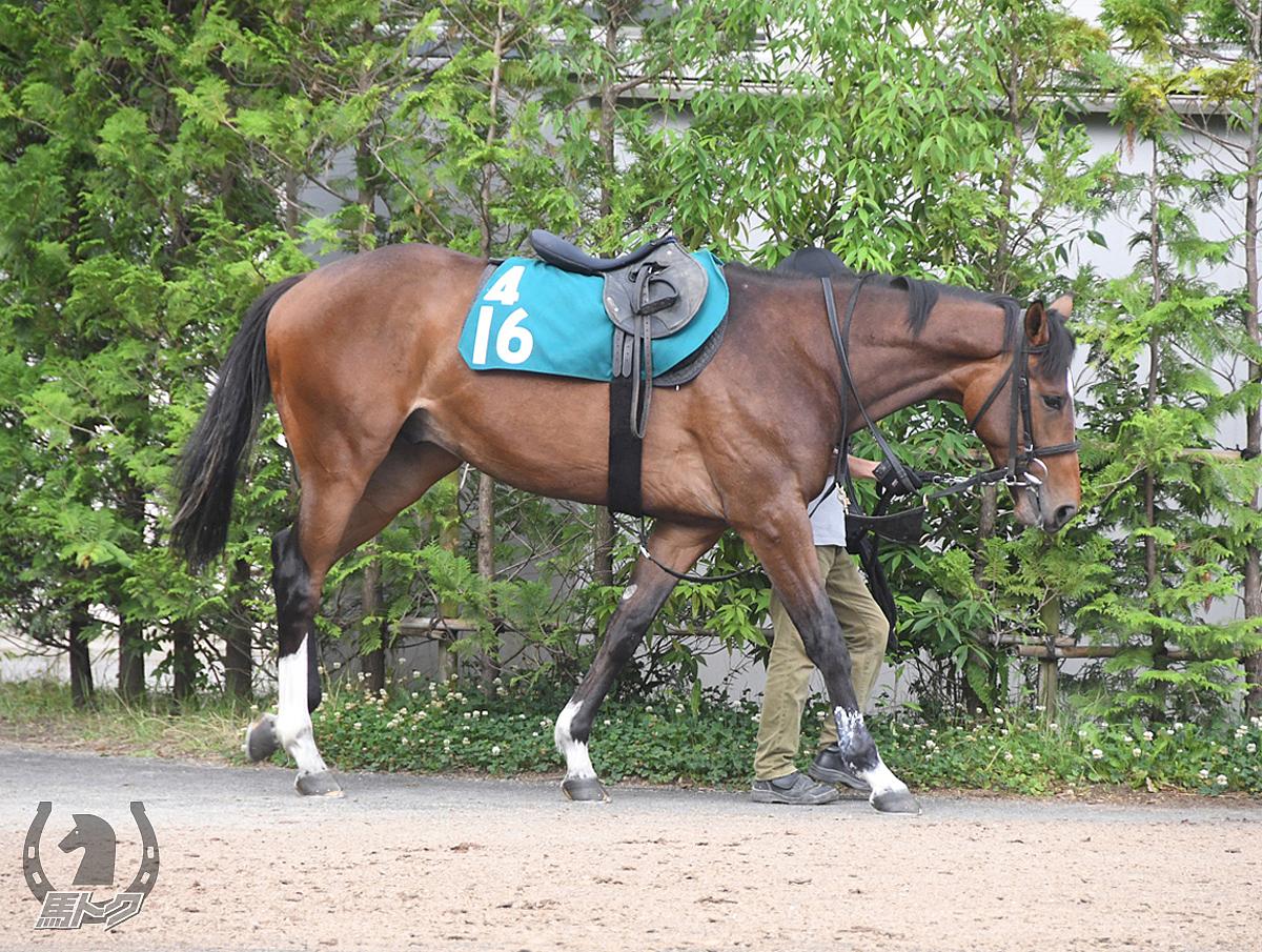 シゲルダイヤの馬体写真