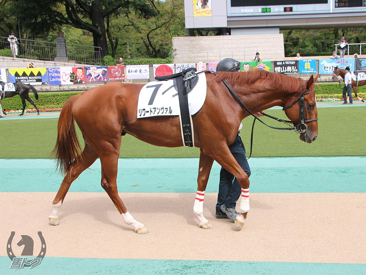 リワードアンヴァルの馬体写真