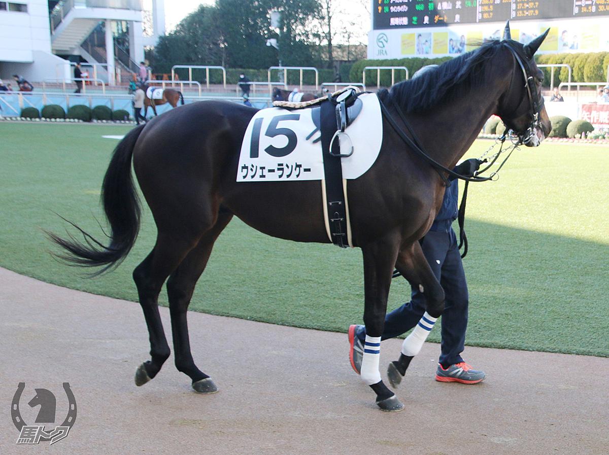 ウシェーランケーの馬体写真