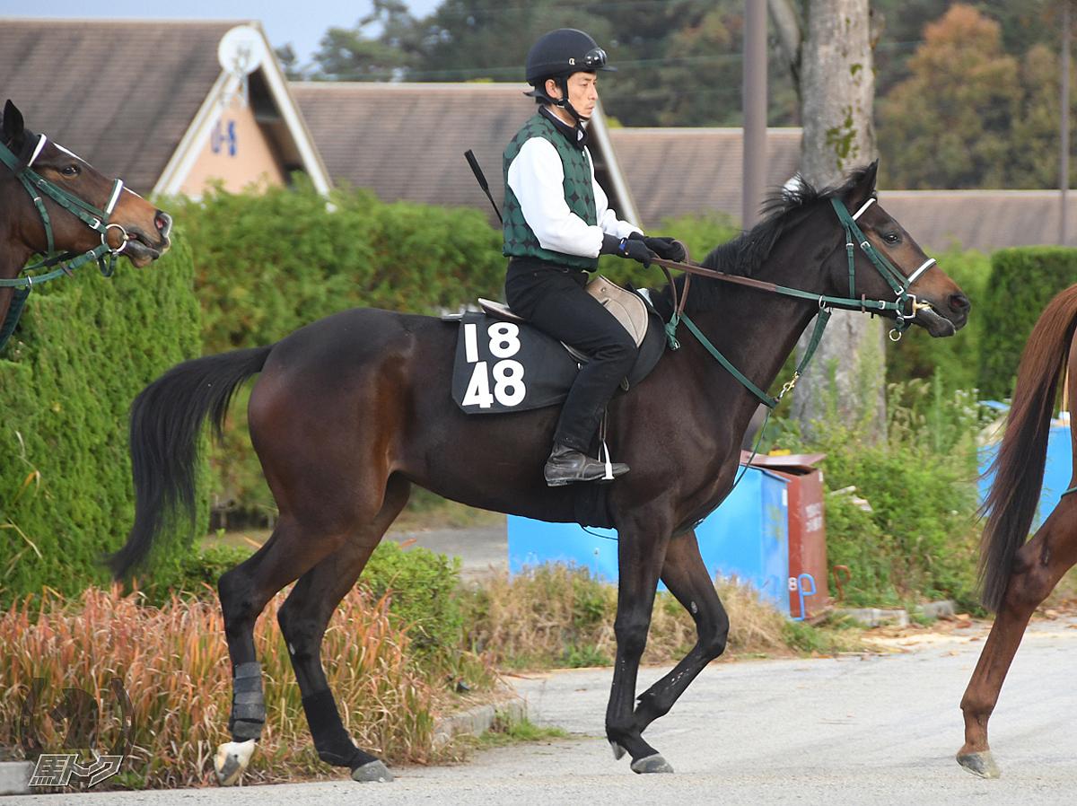 ワンダーエマの馬体写真
