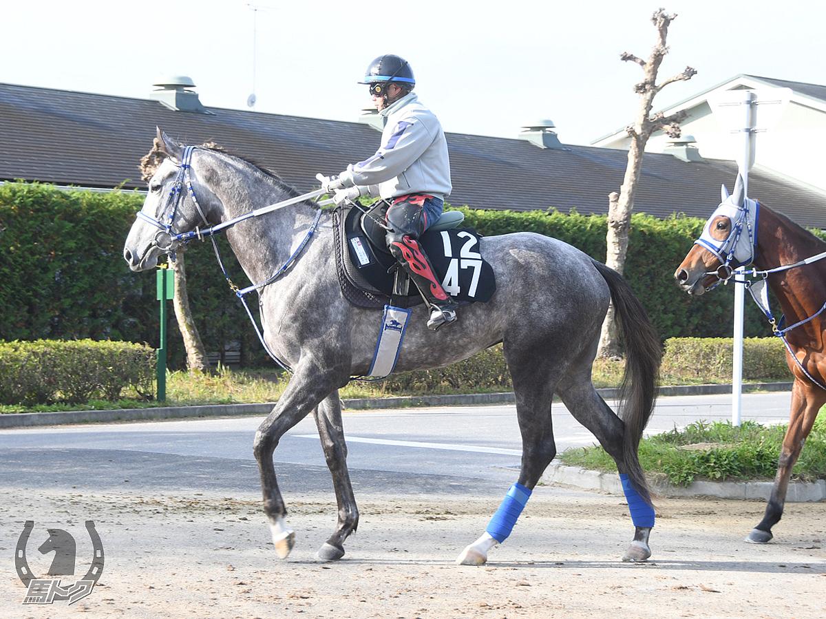 ワンダーエカルテの馬体写真